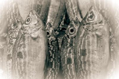 Fish Eye by Valda Bailey