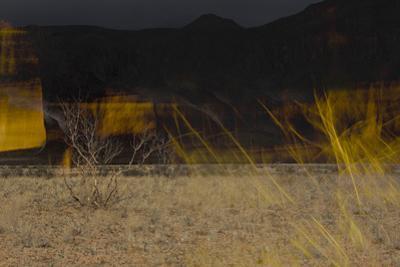 Flame Trees, Namibia