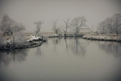 January Still by Valda Bailey