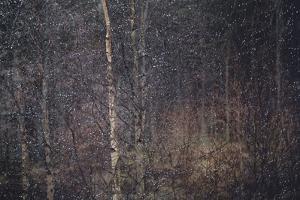 Nature's Diamonds by Valda Bailey
