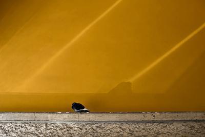 The Early Bird by Valda Bailey