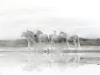 White Horses by Valda Bailey