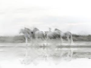 White Horses by Valda Bailey