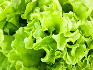 Fresh Green Lettuce Salad by valeev