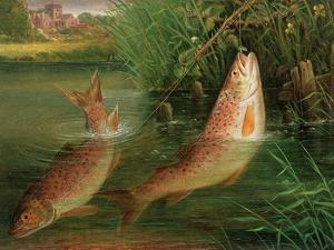 Trout at Winchester by Valentine Thomas Garland