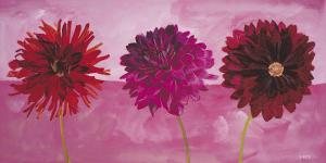 Dahlias Vermillon, Fischia, Carmin by Valerie Roy