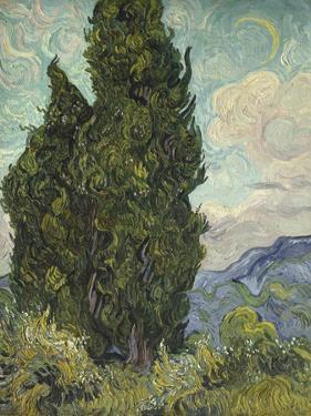 Van Gogh, Cypresses