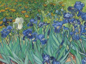 Irises, 1889 - Focus by Van Gogh Vincent