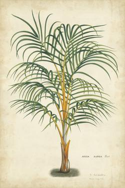 Palm of the Tropics III by Van Houtteano