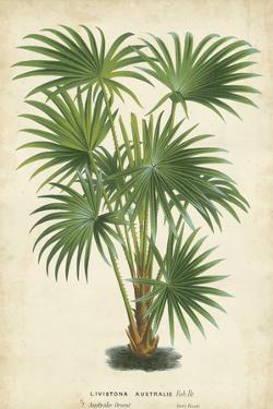 Palm of the Tropics IV by Van Houtteano