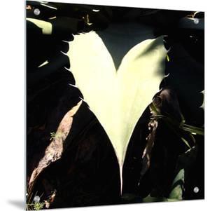 I See Hearts by Vanesa Munoz