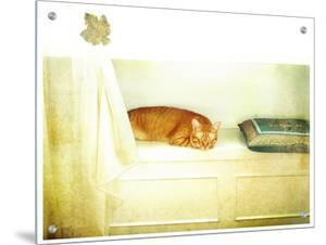 Catnap by Vanessa Ho