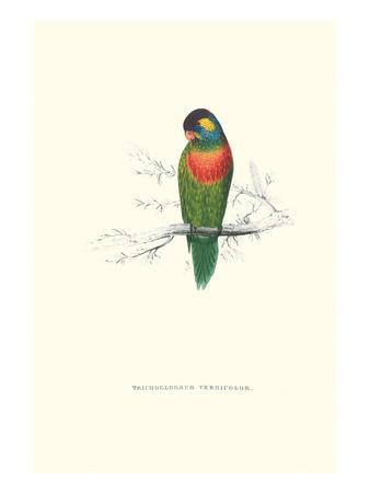 https://imgc.allpostersimages.com/img/posters/variegated-parakeet-trichoglossus-versicolor_u-L-PGG4BQ0.jpg?p=0