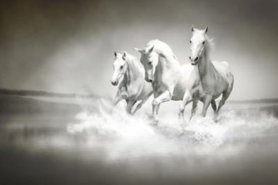 Herd Of White Horses Running Through Water by varijanta