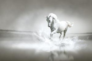 White Horse Running Through Water by varijanta