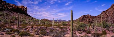 Various cactus plants in a desert, Organ Pipe Cactus National Monument, Arizona, USA