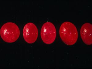 Polished Rubies by Vaughan Fleming