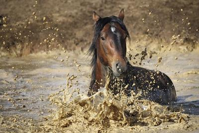 horse in water by Vedran Vidak