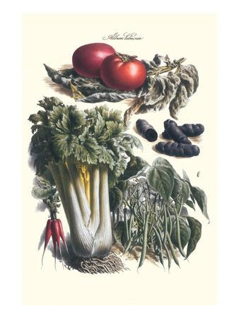 https://imgc.allpostersimages.com/img/posters/vegetables-green-beans-purple-sweet-potato-and-tomato_u-L-PGG21N0.jpg?p=0