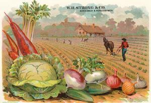 Vegetables, Old Fashioned Farm