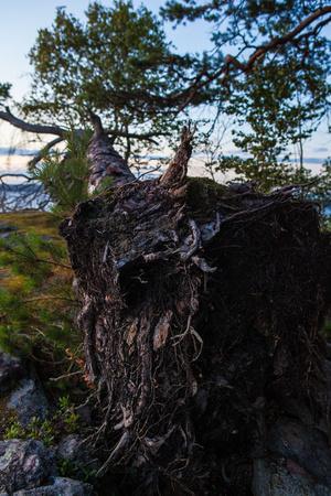 https://imgc.allpostersimages.com/img/posters/vegetation-fallen-tree-shore-stora-le-lake-sweden_u-L-Q1EXUBR0.jpg?artPerspective=n
