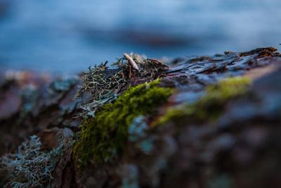 https://imgc.allpostersimages.com/img/posters/vegetation-on-shore-stora-le-lake-sweden_u-L-Q1EXWET0.jpg?artPerspective=n