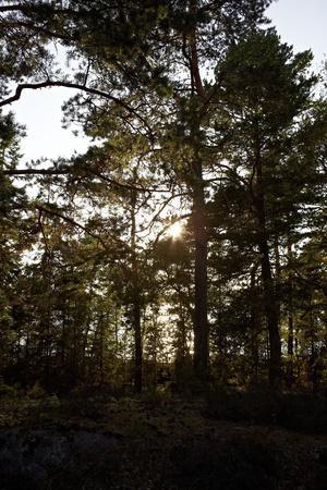 https://imgc.allpostersimages.com/img/posters/vegetation-on-stora-le-lake-dalsland-sweden_u-L-Q1EXTYD0.jpg?artPerspective=n