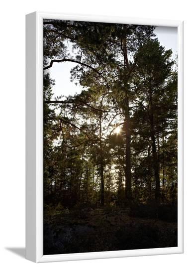 Vegetation on Stora Le Lake, Dalsland, Sweden-Andrea Lang-Framed Photographic Print