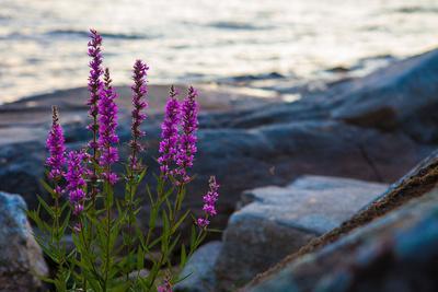 https://imgc.allpostersimages.com/img/posters/vegetation-on-the-shore-stora-le-lake-sweden_u-L-Q1EXSMI0.jpg?artPerspective=n