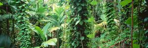 Vegetation Seychelles