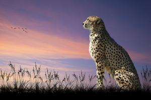 African Safari Concept Image of Cheetah Looking out over Savannnah with Beautiful Sunset Sky by Veneratio
