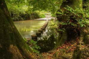 Beautiful Forest Scene of Enchanted Stream Flowing through Lush Green Foliage by Veneratio