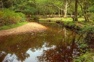 Beautiful Lush Forest Scene with Stream and Touch of Autumn Colors in New Forest, England by Veneratio