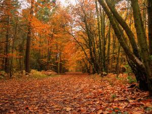 Beautiful Vibrant Autumn Fall Forest Scene in English Countryside Landscape by Veneratio