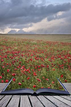 Creative Concept Image of Poppy Field Landscape Coming out of Pages in Magical Book by Veneratio