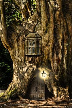 Fantasy Fairytale Miniature House In Tree In Forest by Veneratio