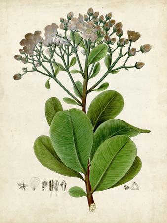 https://imgc.allpostersimages.com/img/posters/verdant-foliage-viii_u-L-Q1C4CH50.jpg?p=0