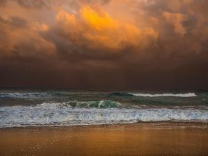 Shoreline Gold by Verne Varona
