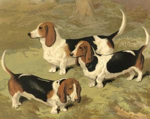 Basset Hounds by Vero Shaw