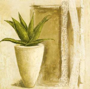 Aloe by Véronique Didier-Laurent