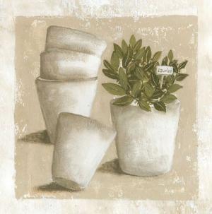 Laurier en Pot by Véronique Didier-Laurent