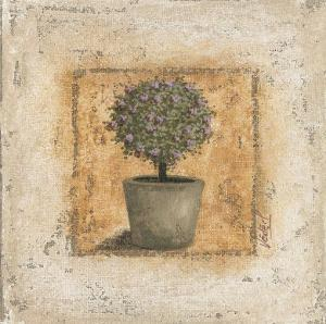 Pot et Arbuste Fleuri by Véronique Didier-Laurent