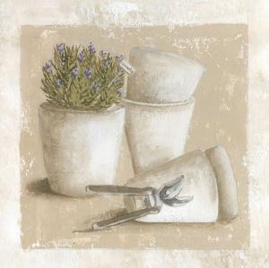 Romarin en Pot by Véronique Didier-Laurent