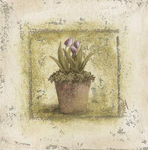 Tulipes Violettes by Véronique Didier-Laurent
