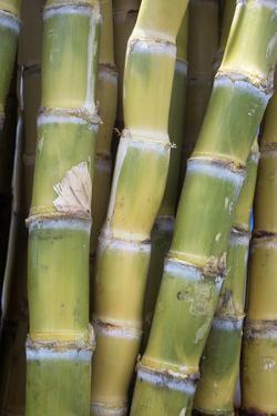 Sugar Cane by Veronique Leplat