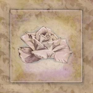 Rose Square II by Veruca Salt