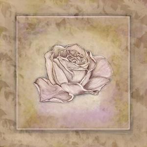Rose Square III by Veruca Salt
