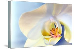 Abstract Close Up of a White Moth Or Phalaenopsis Orchid Flower by Vickie Lewis