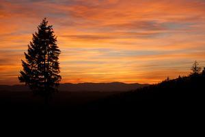 The Sunset over a Vineyard in Tualatin Valley, Oregon by Vickie Lewis