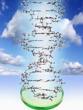 DNA Molecule And Petri Dish by Victor De Schwanberg